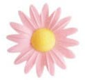 Wafer Yellow Hearted Daisy (Pink-100 per box)