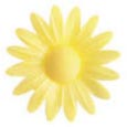 Wafer Yellow Hearted Daisy (Yellow-100 per box)