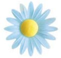Wafer Yellow Hearted Daisy (Blue-100 per box)